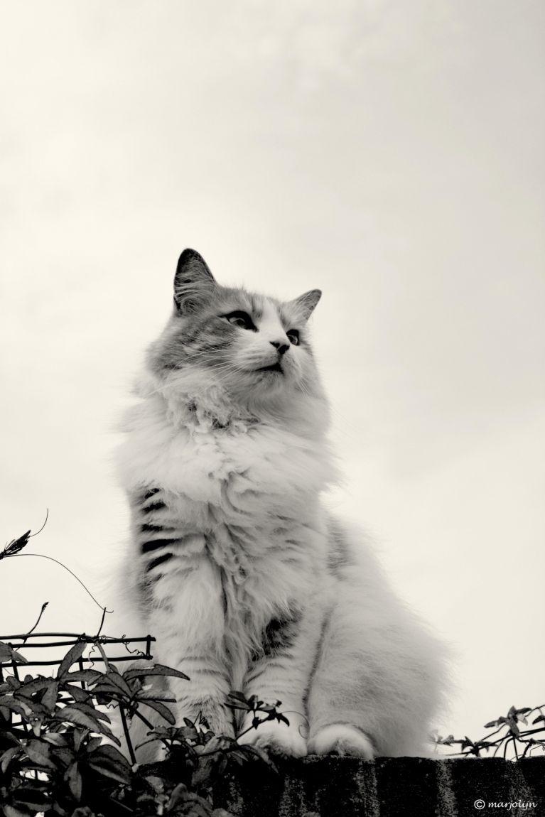 kattendag fotogallery
