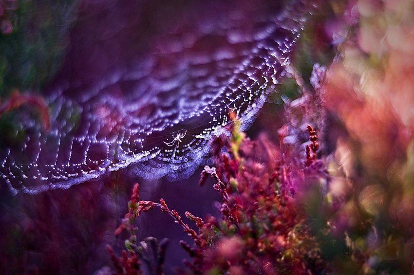 Tips voor het fotograferen van je eigen tuin