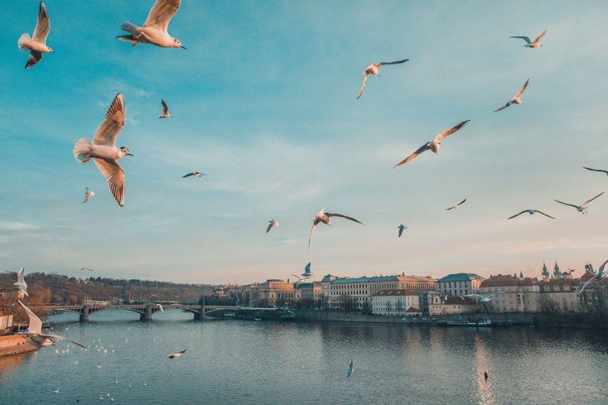 vogelfotografie, fotografie, vogels fotograferen, vogels, tips, instellingen, tips voor vogelfotografie