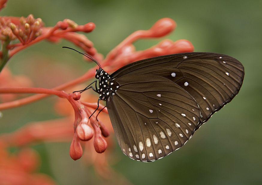 natuurfotografie, natuur, fotografie, dieren, dichtbij, komen