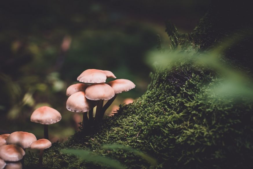 fotograferen in het bos, fotografietips, tips, bos, in het bos fotograferen