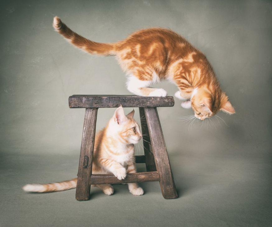 spotlight lezersfoto mirka koot kattenfotografie