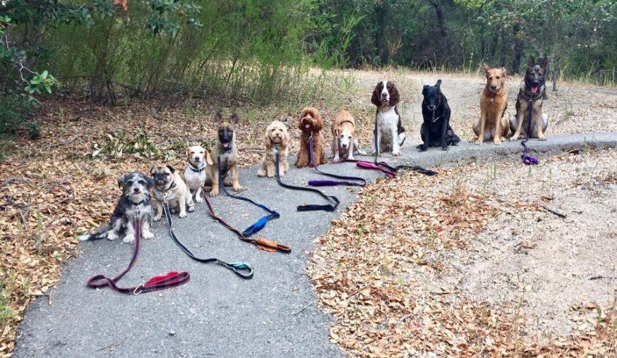 Hondenuitlater maakt elke dag groepsfoto's