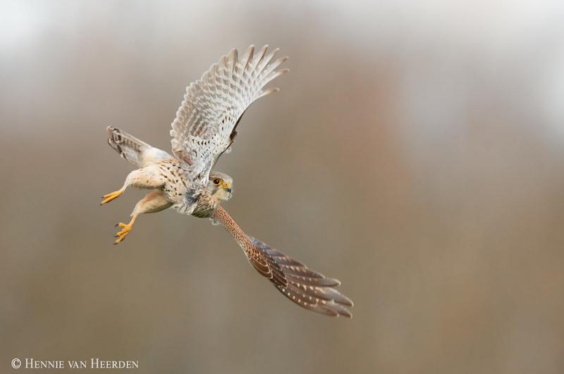 fotofair 2021, Fotofair, masterclass roofvogels fotograferen, Masterclass, roofvogels, fotograferen, leren, Hennie van Heerden