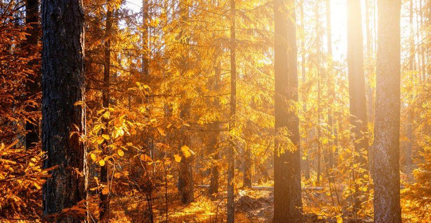 digifoto Starter, magazine, lezersfoto, gallery, herfstfoto, publicatie, herfst