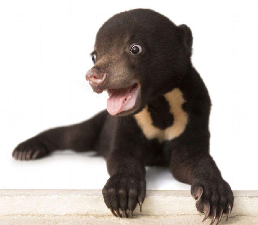 De eerste fotoshoot van deze kleine beer