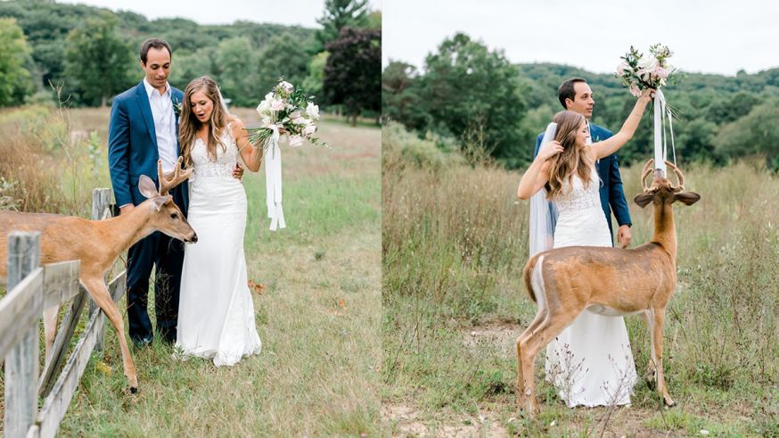 Hert, bruiloftfotografie, prewedding fotografie, natuur, bruiloft, bruidsfoto