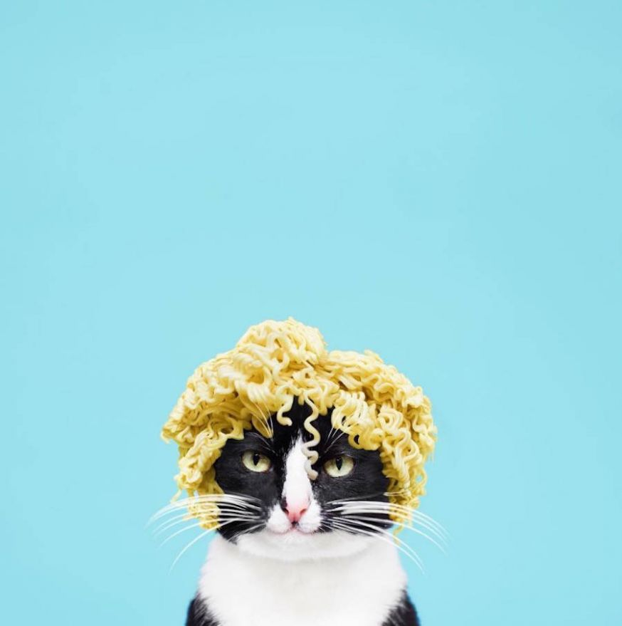 De grappige kat Princess Cheeto