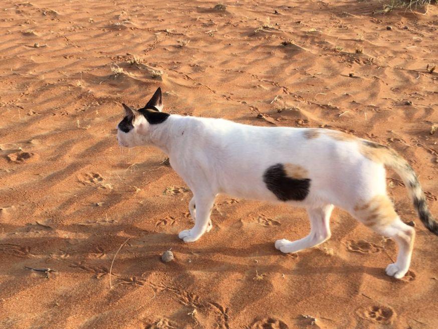 Optische illusie – Kat heeft gat in buik