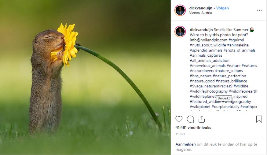 Eekhoorn-viraal