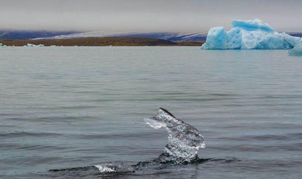 August Puchmann fotografeert ijskonijn