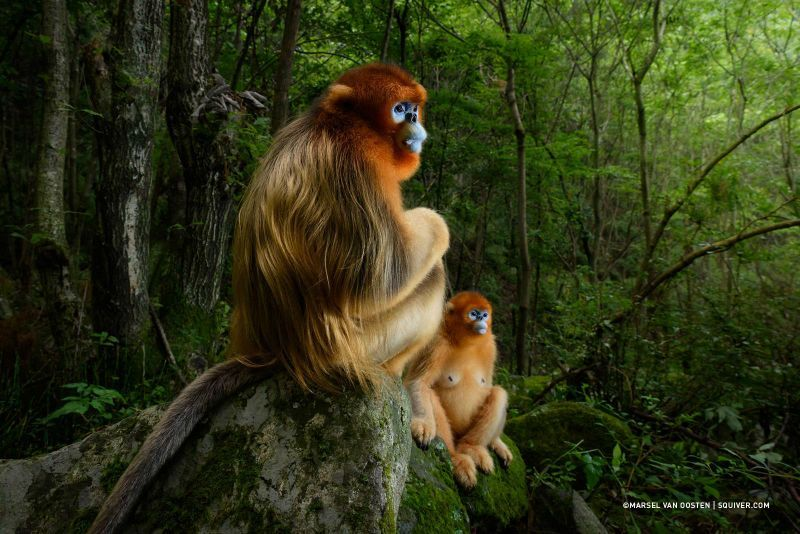 marsel van oosten wildlife photographer of the year 2018