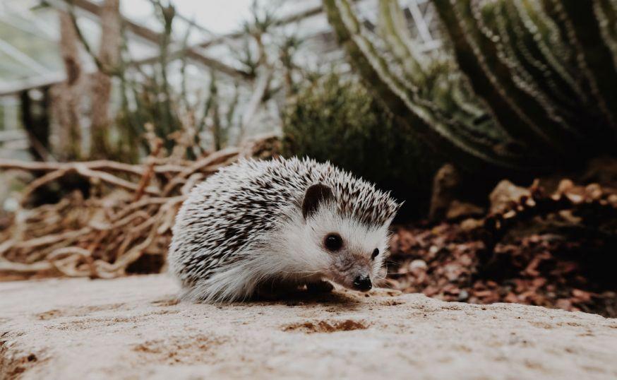 Starter, lezersfoto, DIGIFOTO Starter 3.2019, uitgelicht, gallery, huisdier, kleine huisdieren, kleine huisdieren fotograferen