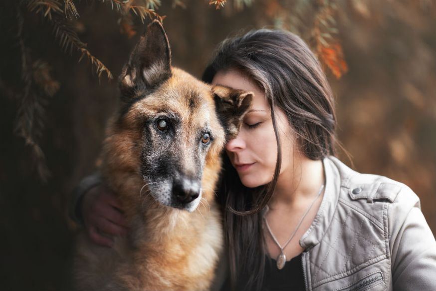 Dog Photographer of the Year, awards, Monica van der Maden, huisdieren, honden fotograferen, honden