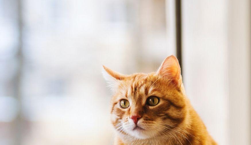 huisdierenfotografie, huisdieren fotograferen, fotograferen van huisdieren, huisdieren