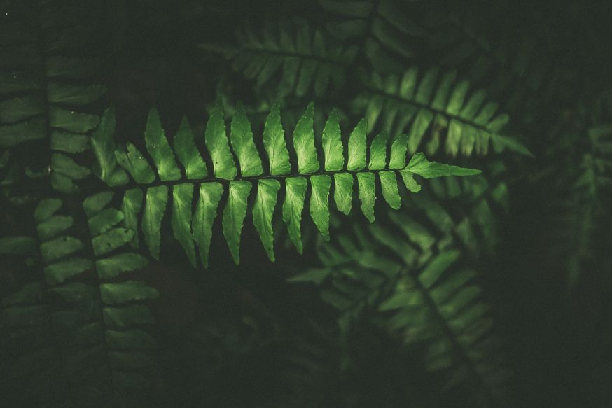 stilleven, natuur, studio