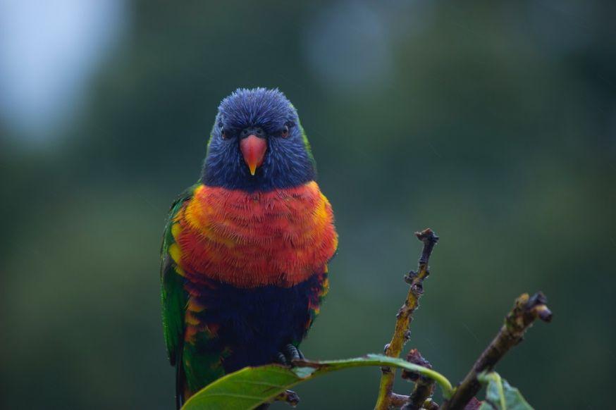 vogels, Licht, opstelling, slim, grappig, mooi, natuur, vogel, wildlife