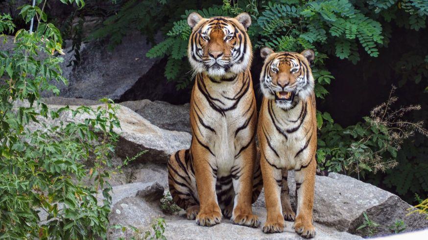wildlife fotograferen in de dierentuin
