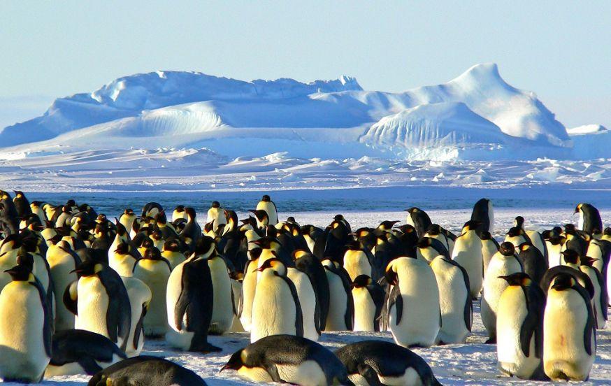 wildlife fotografie, wildlife fotograferen, fotografie, wilde dieren