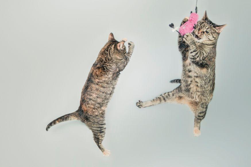 spectaculaire bewegingen bevriezen, 10 tips voor huisdieren fotografie