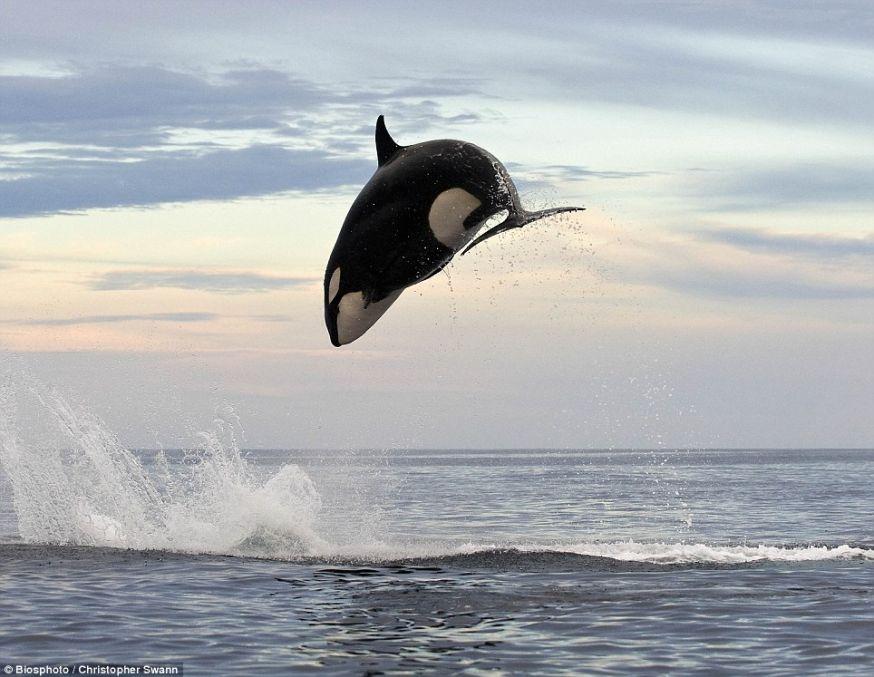 Hoe fotografeer je een walvis
