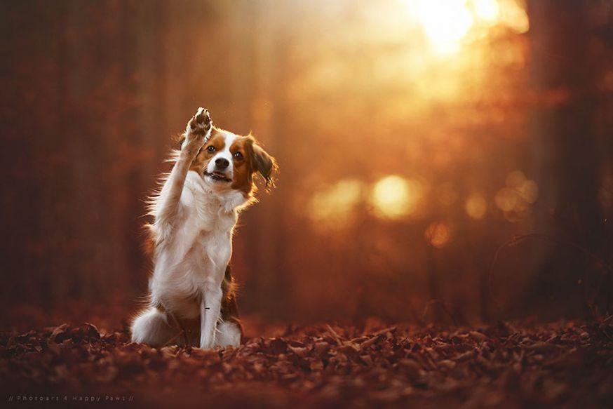 Fabulous Prachtige foto's van honden in de herfst | digifoto Starter #XZ07