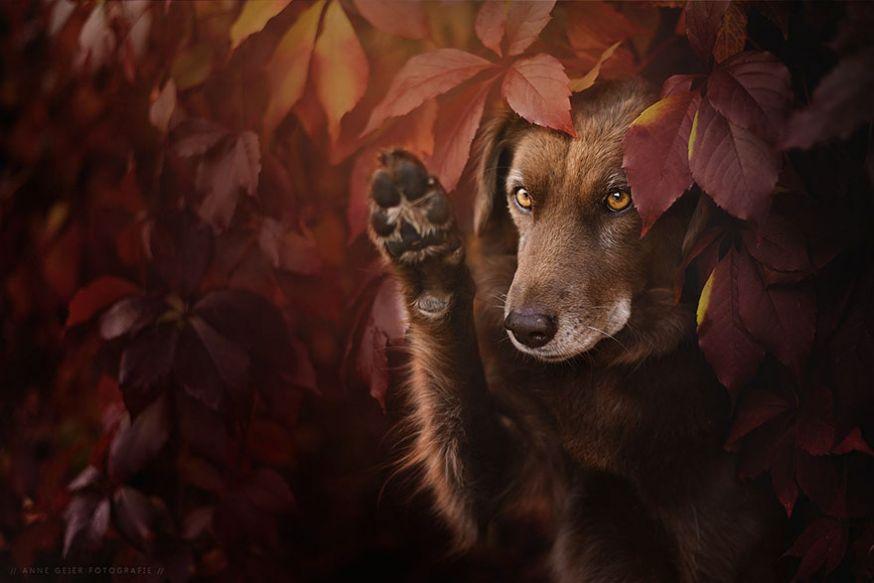 Prachtige foto's van honden in de herfst