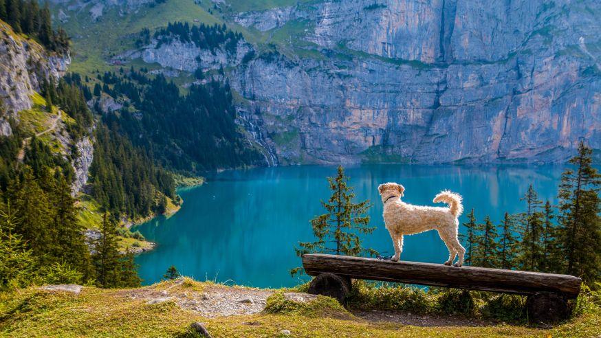 comfort zone omgeving, 10 tips voor huisdieren fotografie