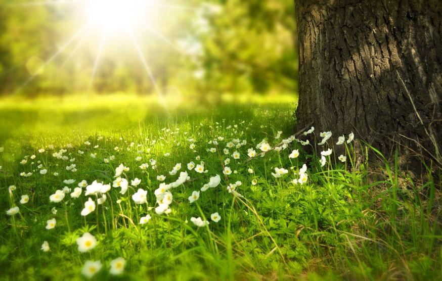natuurfotografie, fouten in natuurfotografie, fotografie, natuur, tips, fotograferen in de natuur, fotograferen, buiten