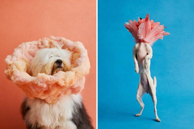doggo kappen kap fotografe kunst