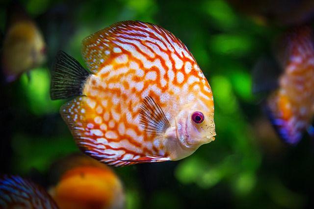 fotograferen in een aquarium