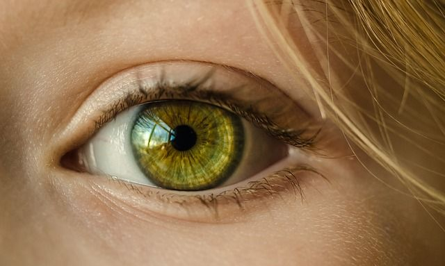 macro, macro objectief, macrofotografie, voorzetlens, close up
