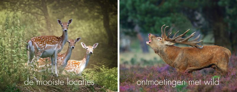 Masterclass: Natuurfotografie