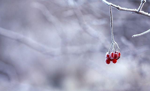winter, sneeuw, ijs, rijp, wit, overbelicht, high key, middengrijs