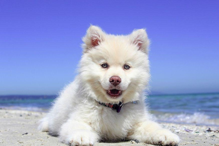 Zeer Honden fotograferen als een prof! | digifoto Starter &QD58