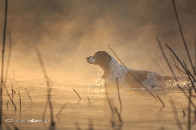 Dog photographer of the year