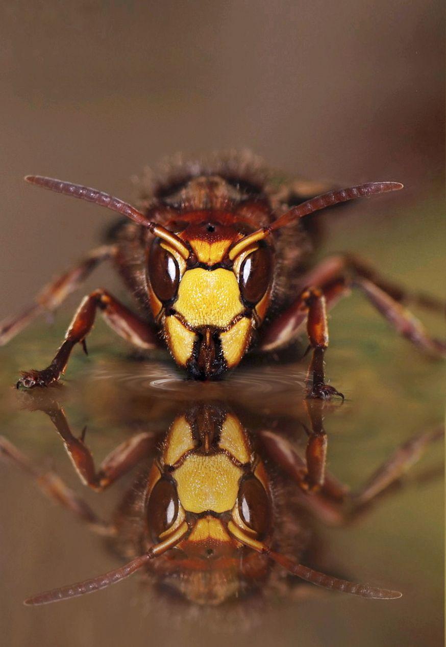 insecten fotograferen basiscursus een paar tips
