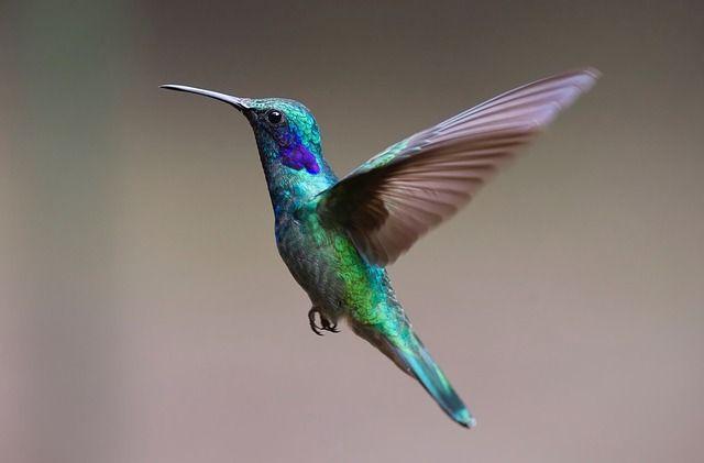 vogels fotograferen, vogels, vogelfotografie