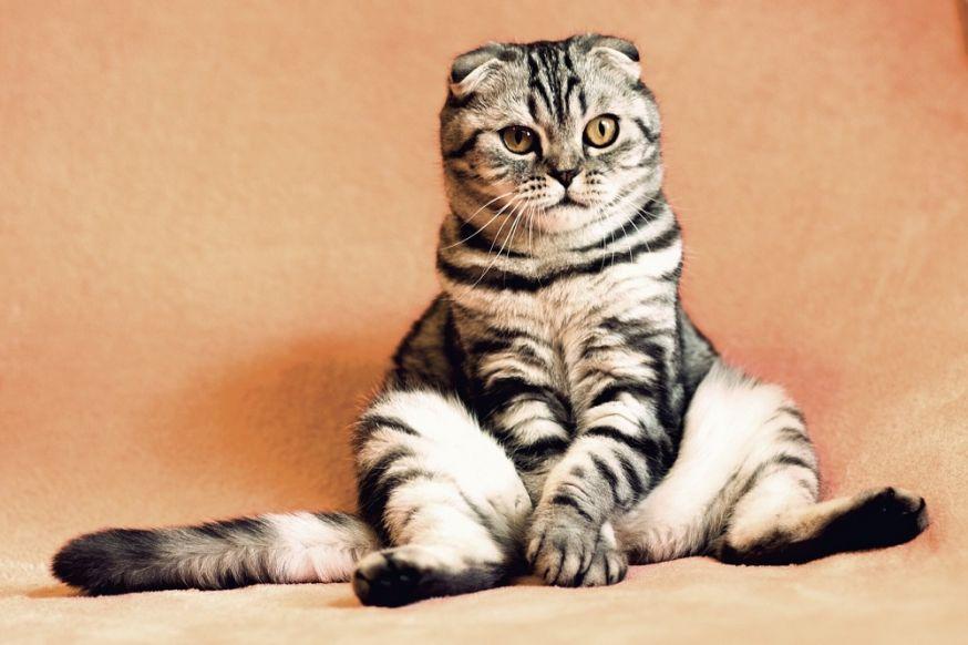huisdier, fotograferen, huisdierenfotografie