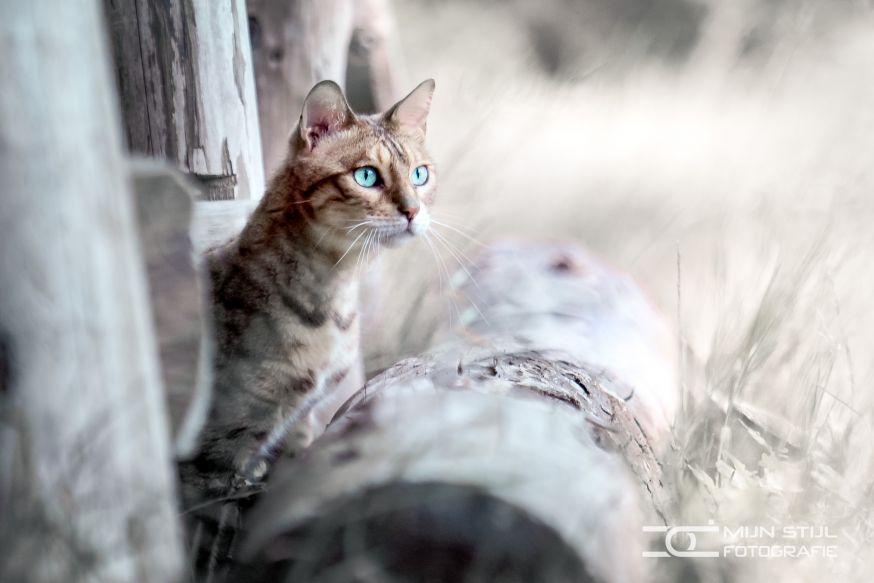 fotofair workshop kattenfotografie