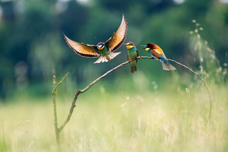 5 tips voor het fotograferen van vogels