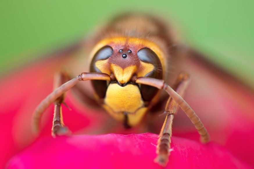 macro insect
