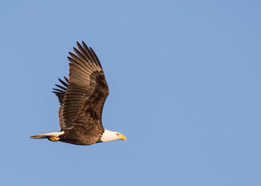 wildlife fotografie, wildlifefotografie, wildlife, wilde dieren, in het wild