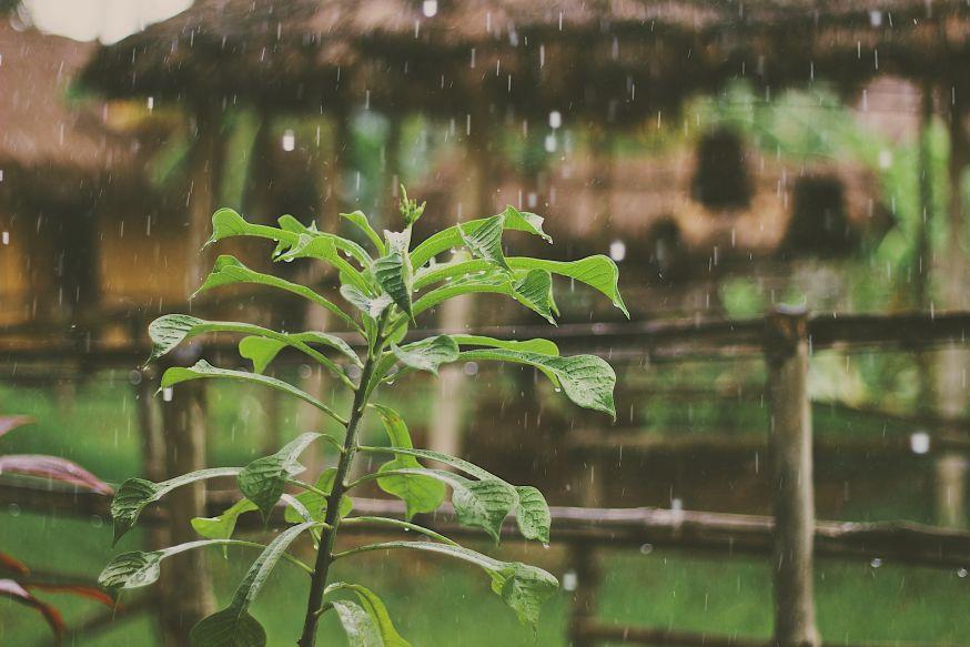 regenachtige, regen, herfst, winter