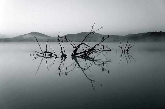 natuurfotografie, natuur fotograferen, wildlife
