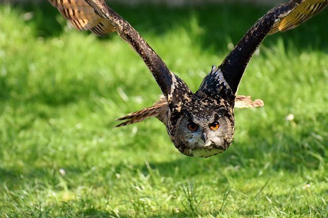 vogels, vogels fotograferen, wildlife, wildlife fotografie