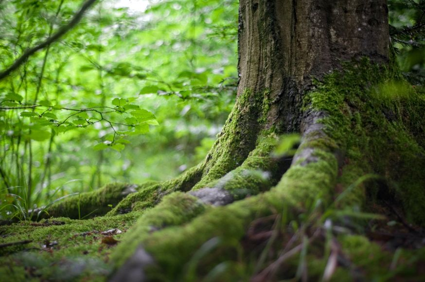 fotograferen in het bos basiscursus