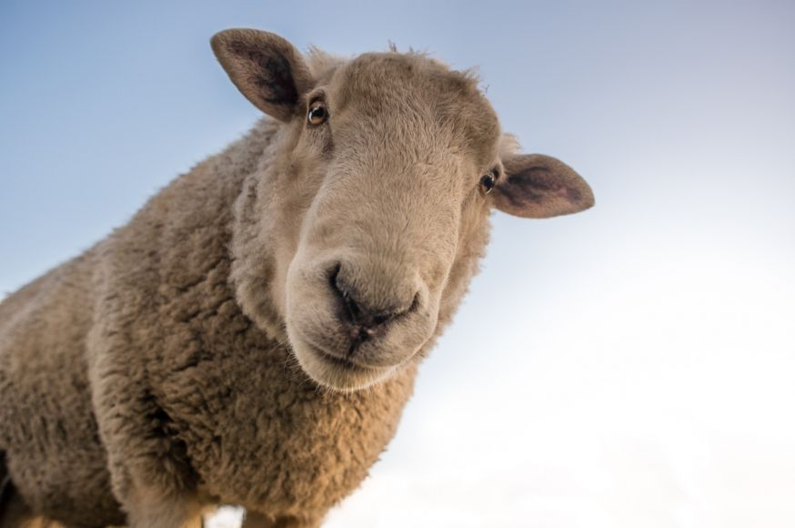 op avontuur in nederland, fotolocaties: platteland