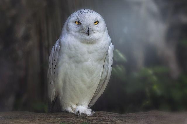 cameraval, wildlife, wildlife fotografie