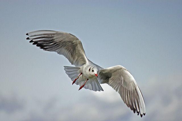 vogels, vogels fotograferen